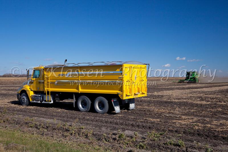 Combine harvester harvesting beans on the Froese farm near Winkler, Manitoba, Canada.