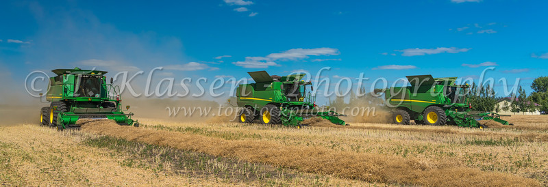 Three combines harvesting canola on a field on the Froese farm near Winkler, Manitoba, Canada.