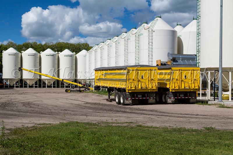 Grain bins and yellow grain trucks on the Froese Enterprises farm near Winkler, Manitoba, Canada.