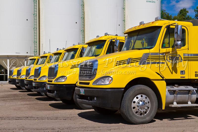Six yellow grain trucks on the Froese farm near Winkler, Manitoba, Canada.
