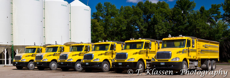 Six yellow grain trucks on the Froese farm near Winkler, Manitoba, Canada.