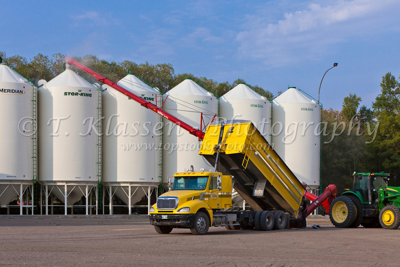 Unloading soybeans on the Froese farm near Winkler, Manitoba, Canada.