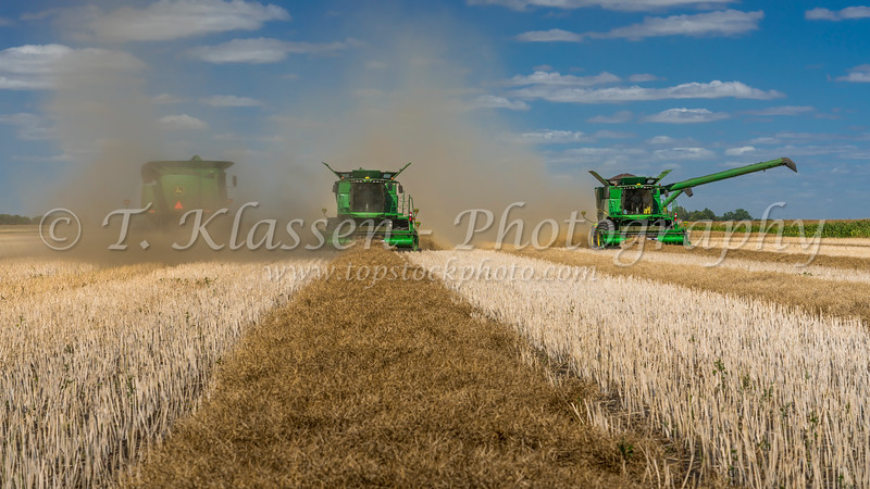 Canola harvest on the Froese farm near Winkler, Manitoba, Canada.