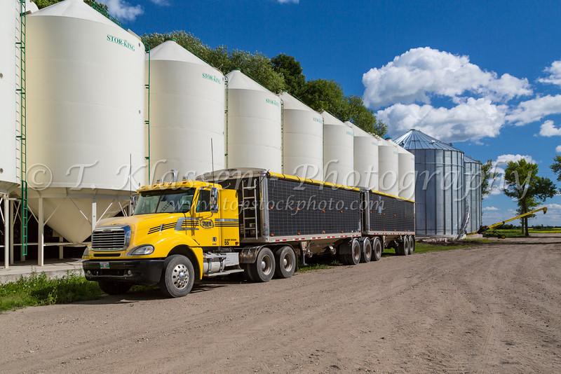 Grain bins and yellow grain truck on the Froese Enterprises farm near Winkler, Manitoba, Canada.
