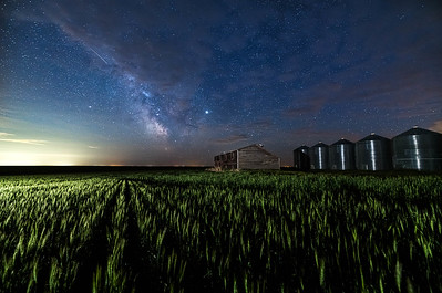 barley 11