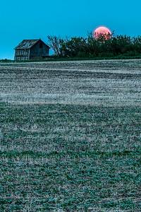 barley 3