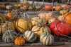Park Winters Pumpkins-2788