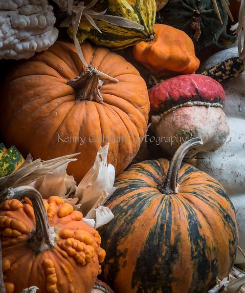 Front Porch Pumpkins _N5A1773
