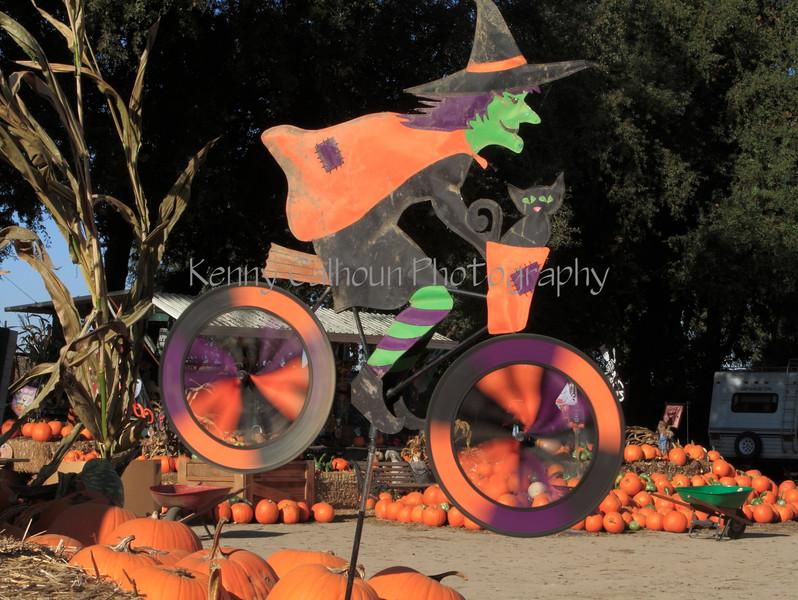 IMG_4625UncleRaysPumpkinPatch