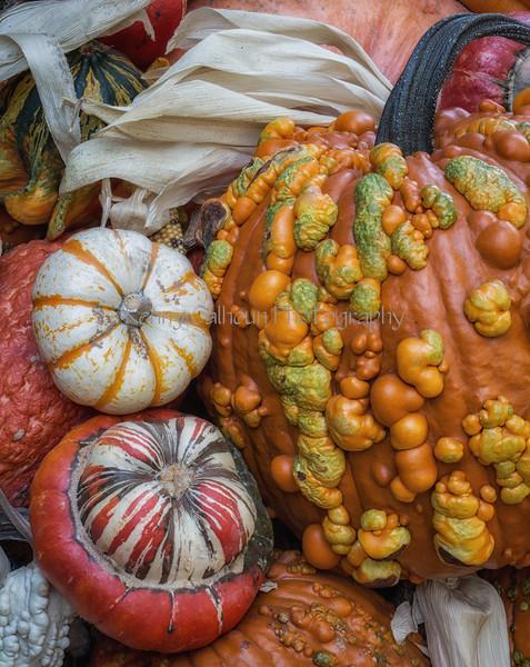 Front_Porch_Pumpkins_November_10,_20121N5A6412untitled