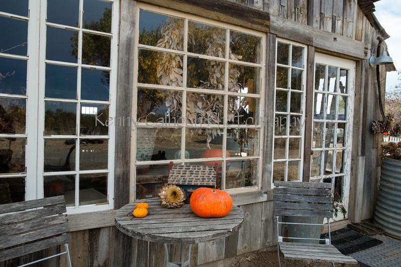 Park Winters Pumpkins-2747