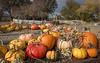 Park Winters Pumpkins-2793