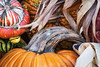 Front_Porch_Pumpkins_November_09,_20121N5A6363untitled