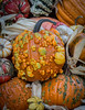 Front_Porch_Pumpkins_November_10,_20121N5A6415untitled