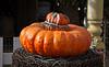 Park Winters Pumpkins-2758