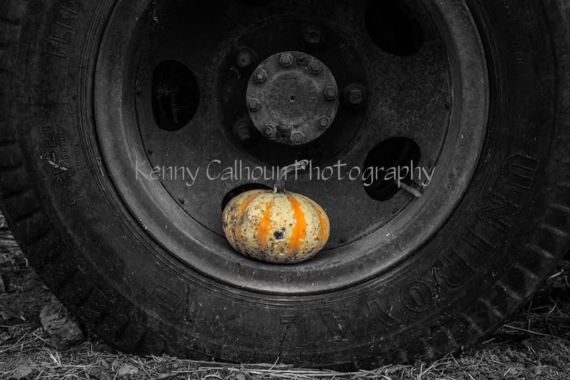 Park Winters Pumpkins--8