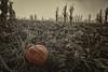 Zombie Pumpkins_N5A7080-Edit