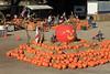 IMG_4607UncleRaysPumpkinPatch