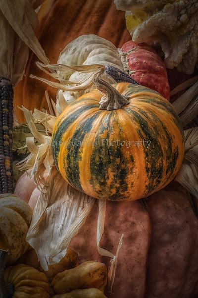 Front_Porch_Pumpkins_November_09,_20121N5A6397untitled