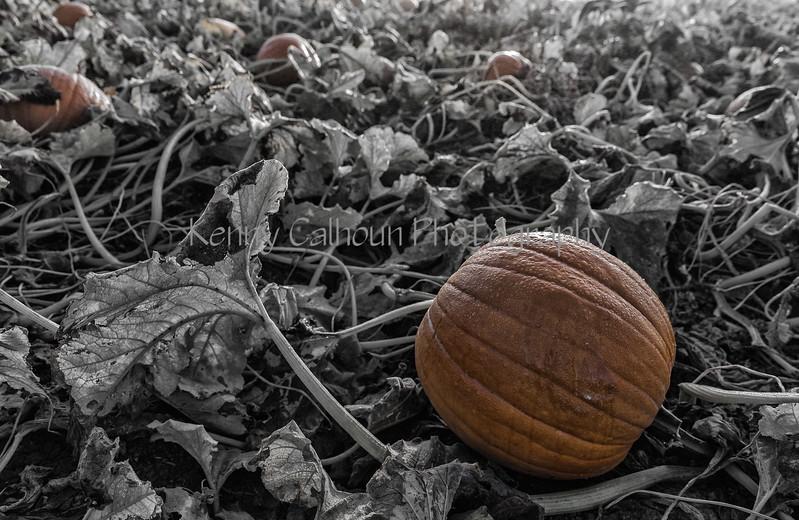 Zombie Pumpkins_N5A7086-Edit