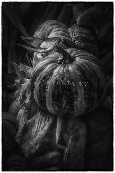 Front_Porch_Pumpkins_November_09,_20121N5A6397untitled-2-2