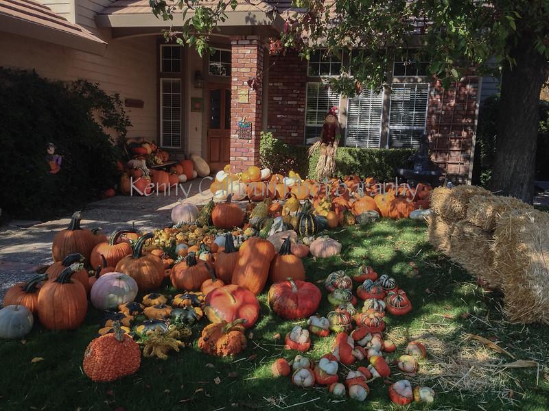 Front Porch Pumpkins photo(1)-2