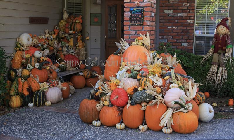Front Porch Pumpkins _N5A7561