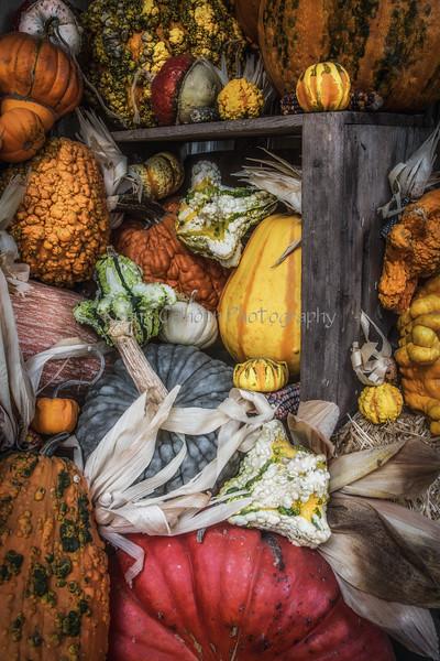 Front Porch Pumpkins _N5A1770-Edit