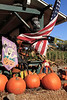 IMG_4600UncleRaysPumpkinPatch