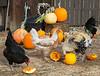 Park Winters Pumpkins-2812