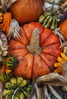Front_Porch_Pumpkins_November_09,_20121N5A6320untitled