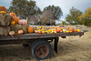 Park Winters Pumpkins-2856