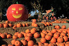 IMG_4620UncleRaysPumpkinPatch