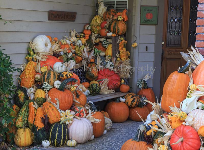 Front Porch Pumpkins _N5A7570
