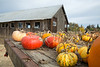 Park Winters Pumpkins-2845