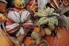 IMG_9482Pumpkins