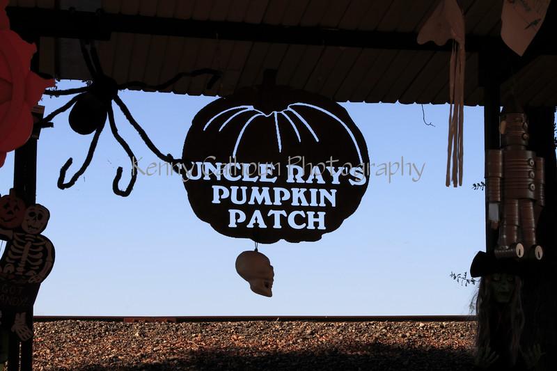 IMG_4603UncleRaysPumpkinPatch