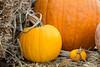 Park Winters Pumpkins-2852