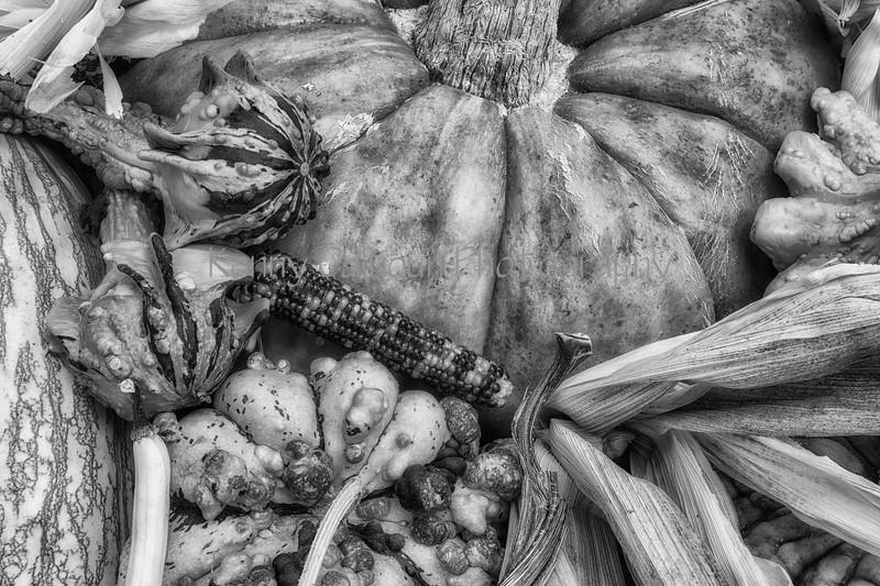 Front_Porch_Pumpkins_November_09,_20121N5A6335untitled-2