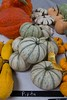 2014 Heirloom Fest Squash_N5A0089