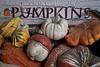 Front Porch Pumpkins _N5A1778