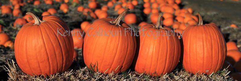 IMG_2818CoolPatchPumpkins