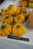 2014 Heirloom Fest Squash_N5A0098