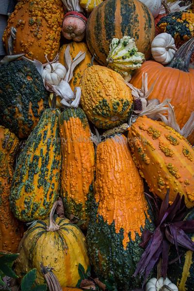 Front Porch Pumpkins _N5A1724