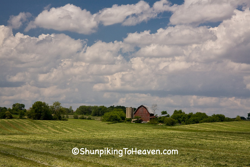 Fresh-Cut Hay Drying in the Field, Dane County, Wisconsin