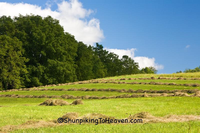 Raked Hay, Iowa County, Wisconsin