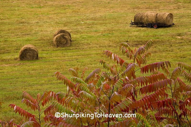Hayfield Scene with Sumac, Crawford County, Wisconsin