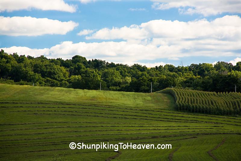 Farm Fields, Iowa County, Wisconsin