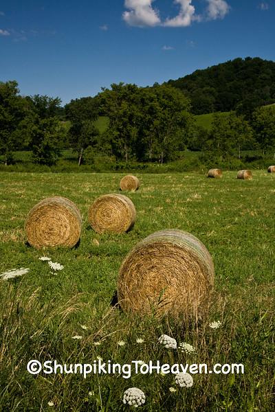 Hayrolls in July, Vernon County, Wisconsin