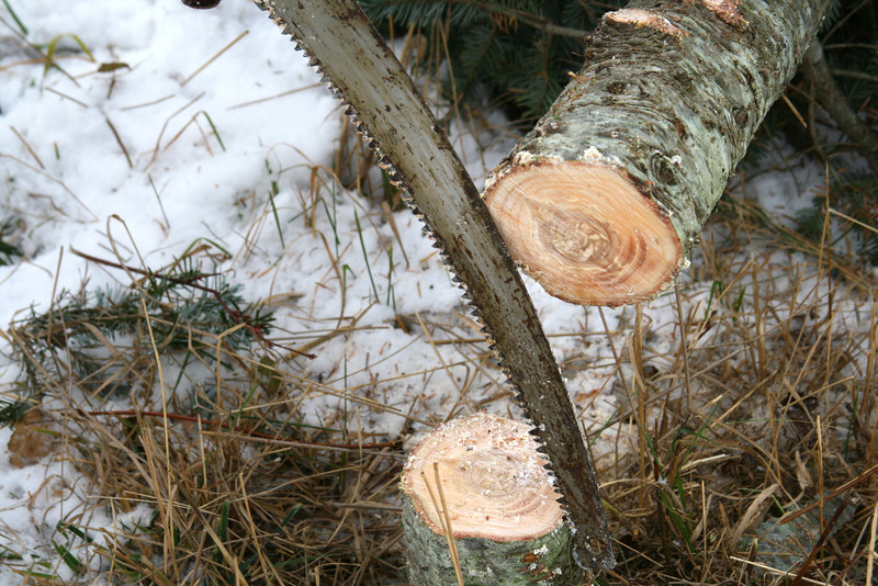 Cutting down a tree.